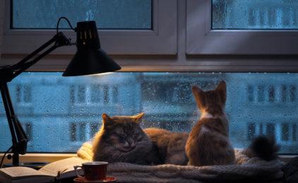 Izolacja akustyczna okien